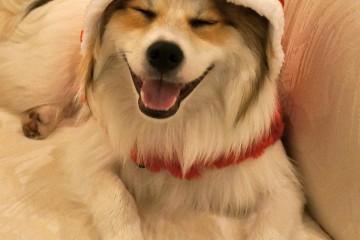 puppy-in-santa-hat